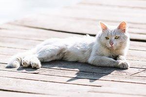 Dirty white homeless cat portrait