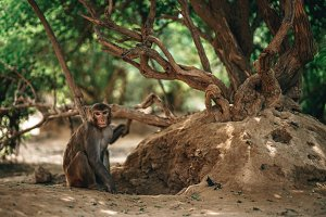 Monkey Hiding From The Sun