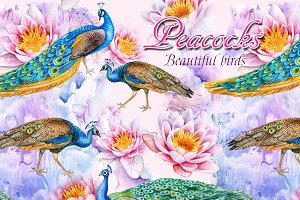 20% OFF! Peacocks. Beautiful birds
