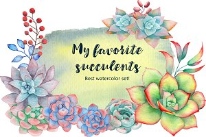 My favorite succulents