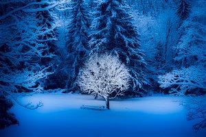 bright winter solitude