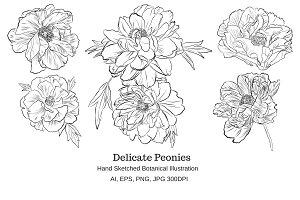 Delicate Peonies