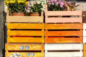Colored wooden crates with flowers