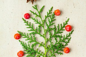 Christmas tree made of thuja branches and decorations star of anise and ashberry on rustic background.