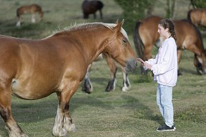 Teenager with Horses in a meadow.