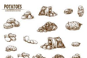 Bundle of 10 potatoes vectors set 2