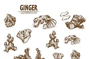 Bundle of 10 ginger vectors set