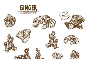 Bundle of 10 ginger vectors set