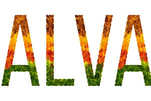 word El Salvador country is written with leaves on a white insulated background, a banner for printing, a creative developing country colored leaves El Salvador