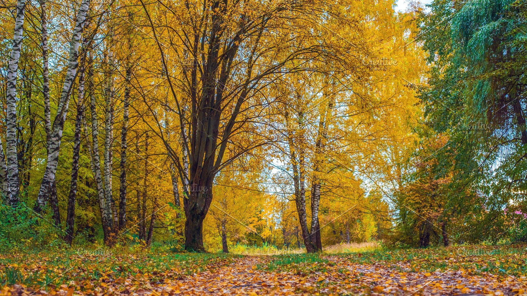 Autumn Forest Beautiful Background Park In Bright Leaves Road In
