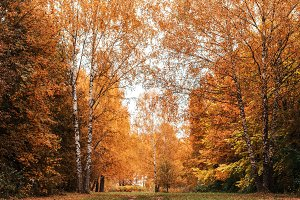 Beautiful autumn park. Foliage on the green grass. Autumn day in the forest. Orange bright background.