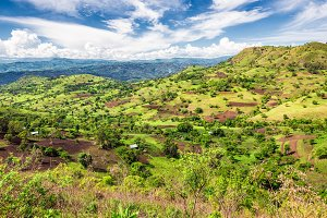 Bonga forest reserve in southern Ethiopia