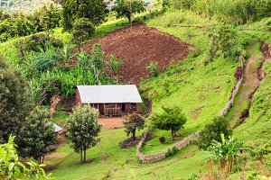 Hut in the Bonga forest reserve in southern Ethiopia
