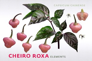 Cheiro Roxa elements