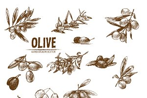 Bundle of 10 olive vectors set 1