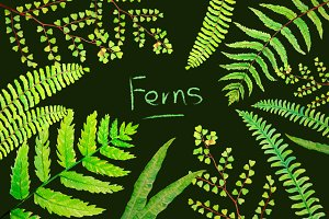 Watercolor Clipart Fern Leaves
