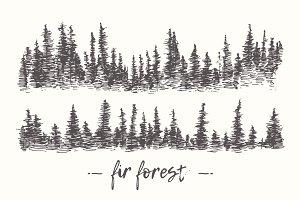 Two illustrations of a fir forest
