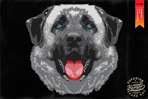 KANGAL - Vector illustration