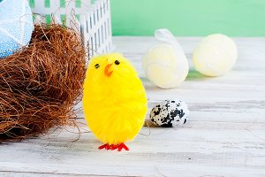 chick and Easter eggs in the nest