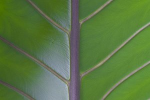 Leaf surface