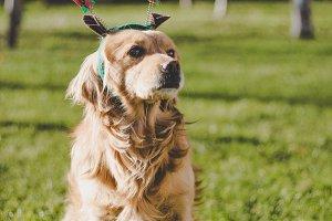 Christmas dog