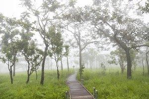 Bridge walkway in the forest