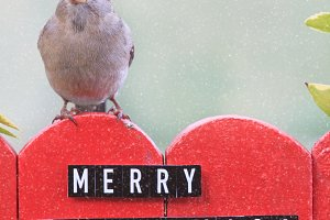 Bird perched on a fence decorated with merry christmas words.
