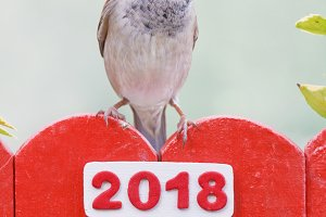 Bird perched on a fence decorated with 2018 numbers.