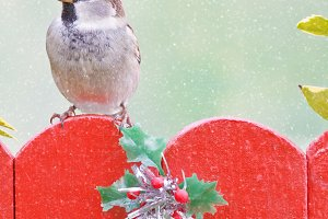 Bird perched on a christmas decorated fence on green background