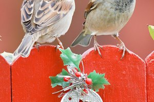 Two birds perched on a christmas decorated fence on red background