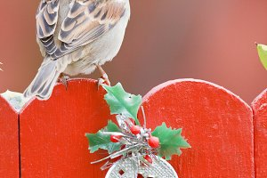 Bird perched on a christmas decorated fence on red background