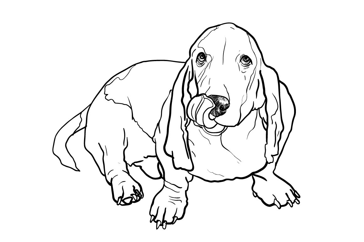 dog basset coloring pages - photo#16