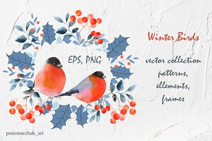 Winter Birds. Vector collection