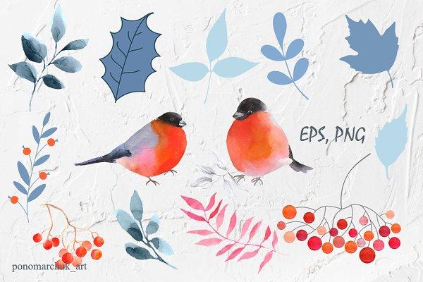 Winter Birds. Vector collection
