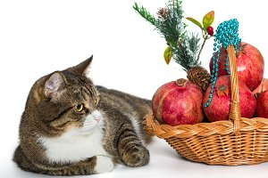 Gray cat  and Christmas basket