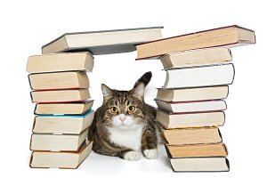 Cat sitting in the house of books