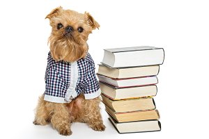 Dog breed Brussels Griffon and books