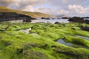 Seascape with algae