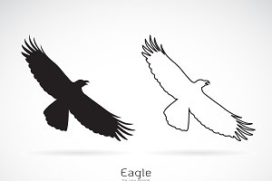 Vector of the eagle. Bird.
