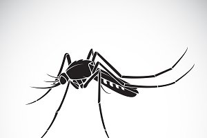 Vector of a Mosquito design.