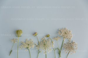 Queen Annes Lace Lay Flat Mock Up