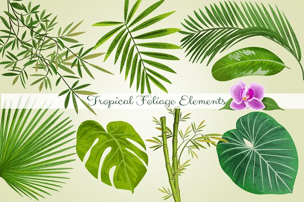 Tropical Foliage PNGGraphic Element…
