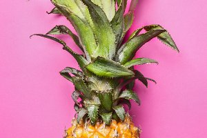 Mini pineapple on a pink background