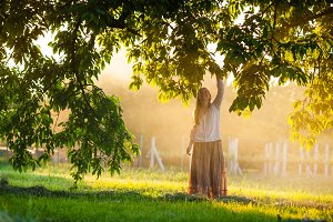 Woman collects fruit from the tree
