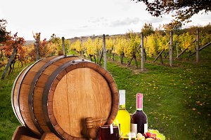 concept of winery