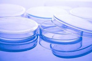 Petri dishes macro
