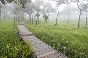 Wooden bridge walkway
