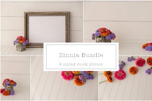 Zinnia Styled Mock Up Bundle