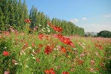 Landscape of flowered field