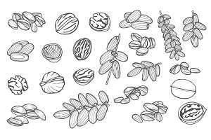 hand drawn nuts